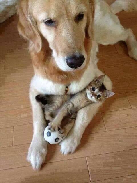 dog cat buddies