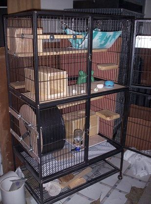 Feisty Ferret Cage My Pets Pinterest Photos Apps