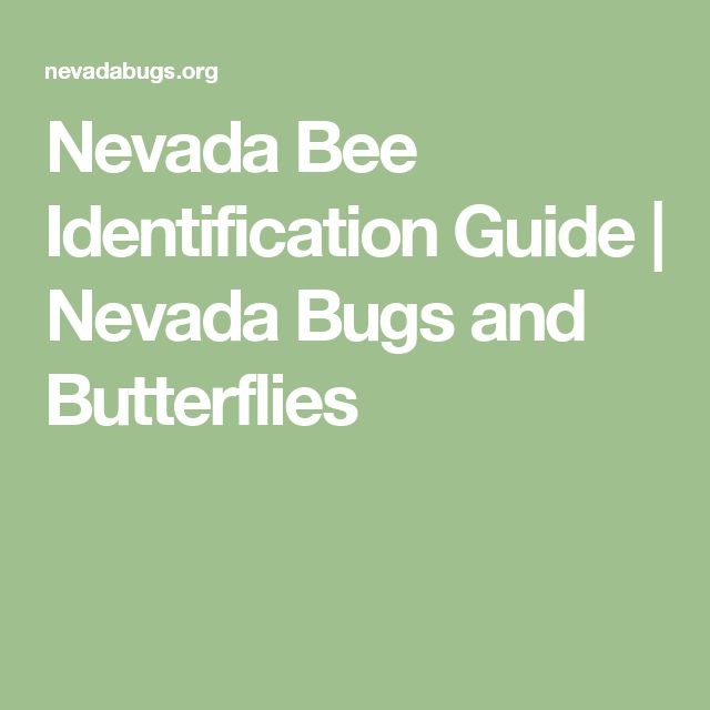 Nevada Bee Identification Guide | Nevada Bugs and Butterflies