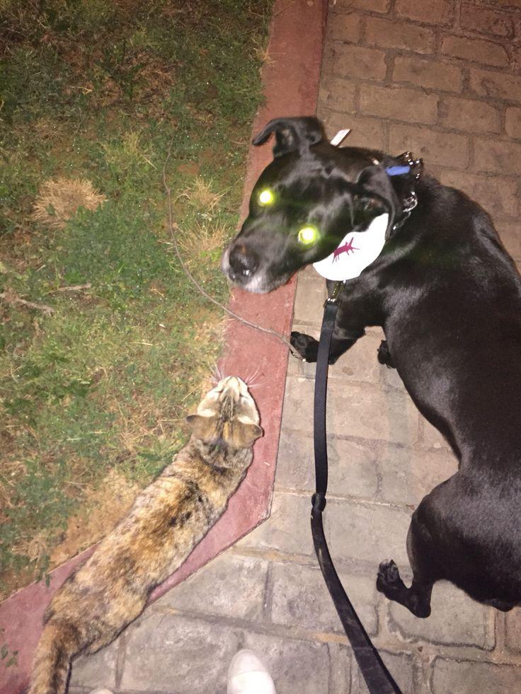 Alien Mushi and foxy