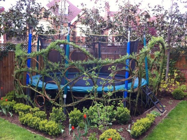 Living willow around a trampoline