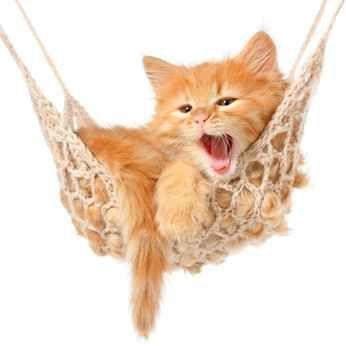 Capire il comportamento del gatto ed il suo linguaggio Quello del comportamento e del linguaggio del gatto è un mondo affascinante e conoscerlo porta ad un più stretto legame con il proprio felino. Nell'articolo vedremo come il gatto reagisce a sol #gatto #comportamento #linguaggio