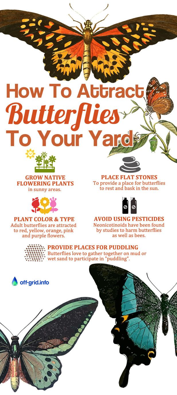 How To Attract Butterflies To Your Yard (With images ...