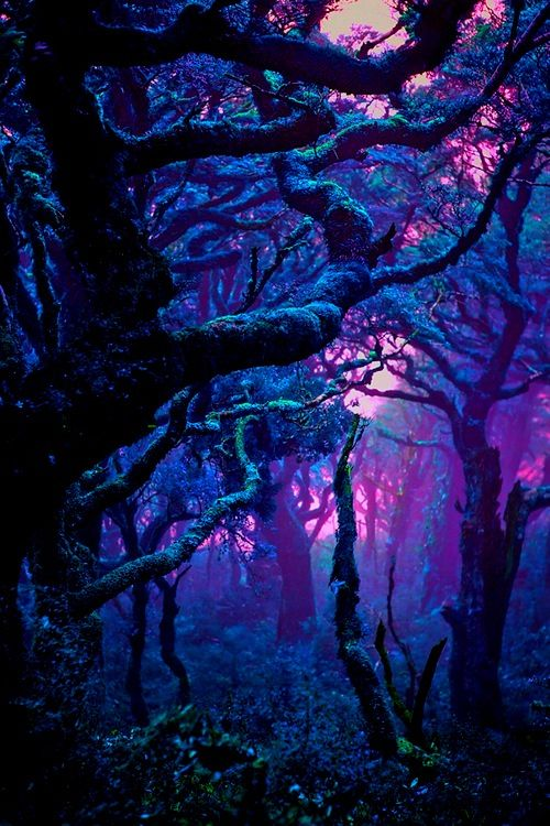 Forest: blues, purples, greens