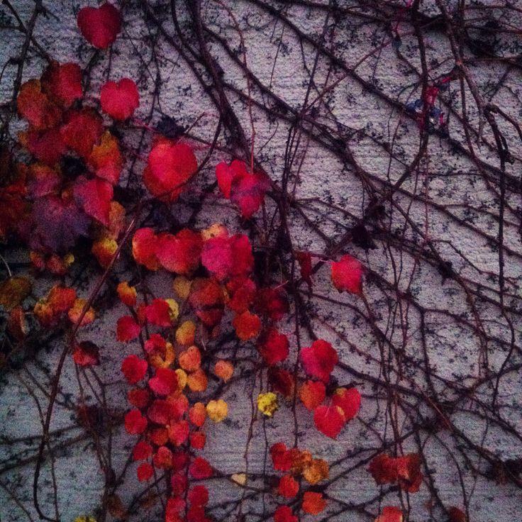 Ciò che autunno ricama.
