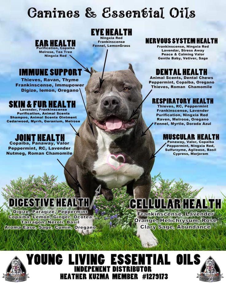 13++ Animal hospital of worthington ideas