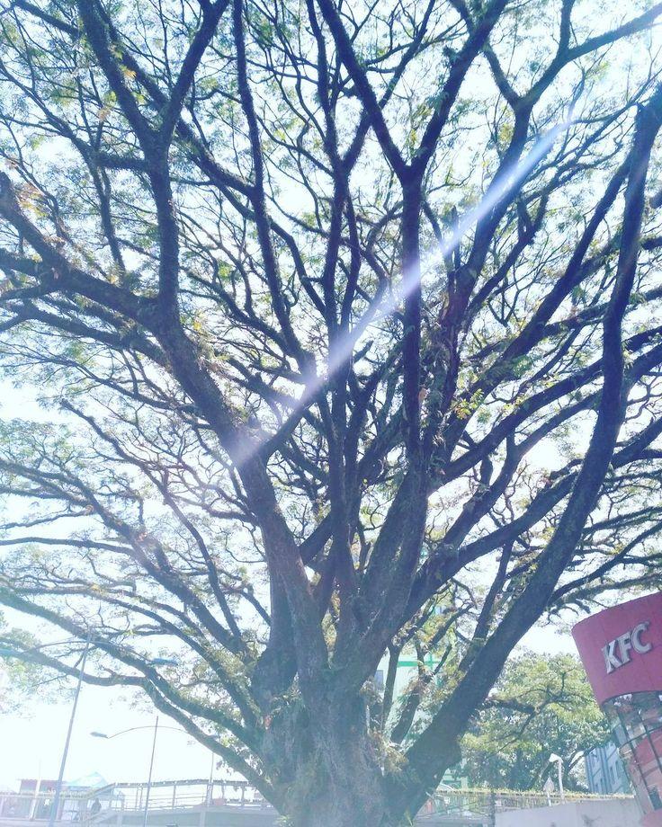 Semuanya berawal dari yang kecil dan satu akar. Lambat laun tumbuh dan berkembang bahkan bercabang. Cinta pun demikian, hidup pun demikian. Namun sebanyak apapun cabang pikiran kita,,, ingatlah kita tetap dalam kendali Alloh yang Maha Kuasa.  #travelling #traveller #skygraphy #sky #photography #photoshoot #pictart #abstractart #tree #woodart #wooddecor #woodworking #wood #wooddesign #art #artdesign #eksteriordesign #design http://tipsrazzi.com/ipost/1517777548812381587/?code=BUQOqOdBm2T