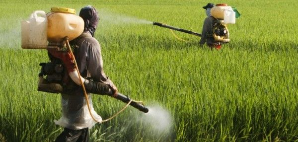 The almighty Monsanto has recently come under fire, after the World Health Organization labeled the main ingredient in the company's popular Roundup weed killer product to be a human carcinogen. Monsanto is currently in damage control mode in an effort to pick up the pieces from this public rel