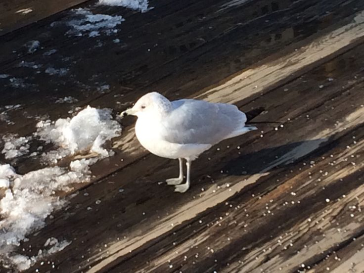 サウスストリートシーポートにいた鳥
