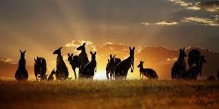 Image result for outback wedding