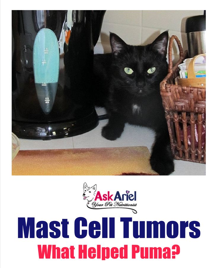 Park Art My WordPress Blog_Mast Cell Tumor Cat Neck