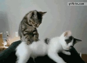 This cat giving another cat a massage...cue the awwwwwweeeeesssss