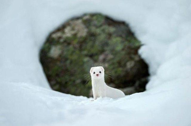 Tidak hanya Manusia, Hewan-Hewan Ini Juga Menggunakan Mantel Ketika Musim Dingin