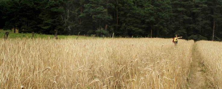 Getreide : Von Emmer bis Weizen