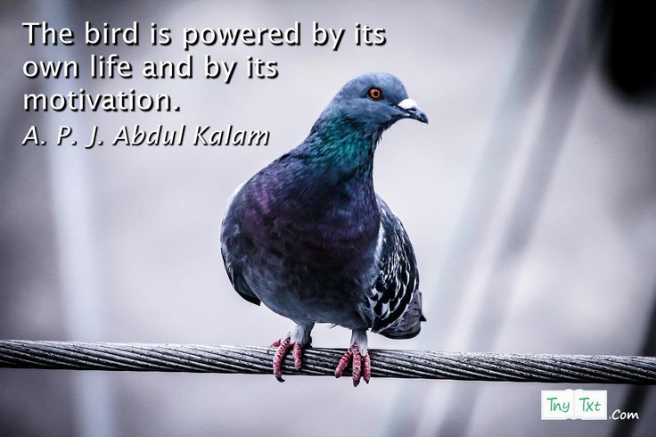 The bird is powered by its own life and by its motivation. - A. P. J. Abdul Kalam #tnytxt #inspirational #quotes #quoteoftheday