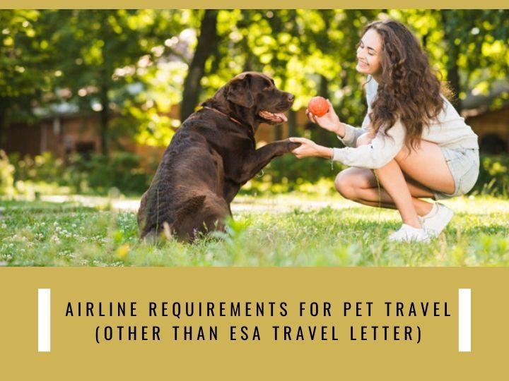 26++ Emotional support animal letter sample airline trends