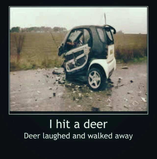 Deer humor/ the deer was fine. The car, not so much!  LOL  (for you katelyn:)