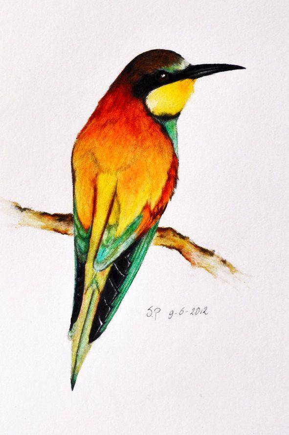 Exotic Bird 11 - Original colored pencil drawing 5.5 x 8 inch. $47.00, via Etsy.