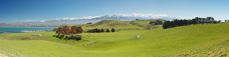 And because the grass doesn't stop till it meets the rocky snow-capped mountains.   53 Reasons Living In New Zealand Will Ruin You For Life