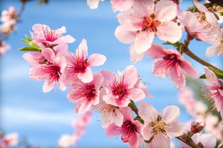 Lovely blossoms.