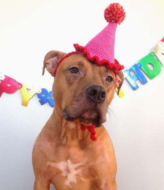 Dog Birthday Hat Party For Dogs Gotcha Day By TheBushelBasket