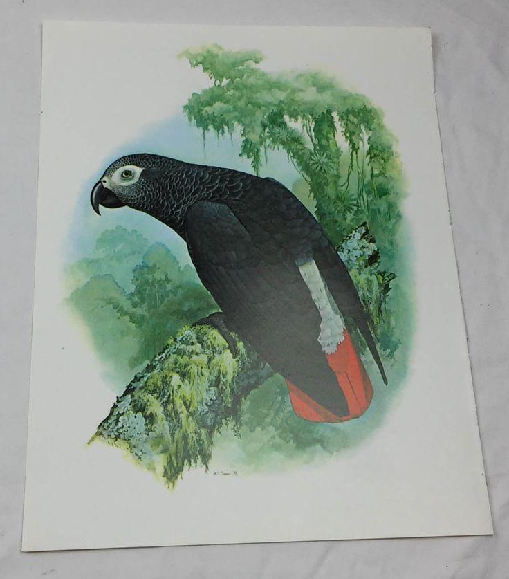 Grijze Papegaai vogel afdrukken William Cooper B100004 door DSOddsEnds op Etsy https://www.etsy.com/nl/listing/477657102/grijze-papegaai-vogel-afdrukken-william