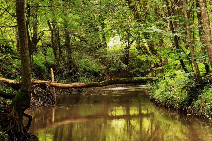 Drienčanský kras - Vyletik.eu #priroda #nature #slovensko #slovakia #cestovanie #travel