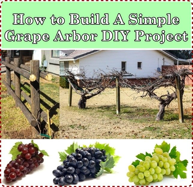 How To Build A Simple Grape Arbor DIY Project Homesteading