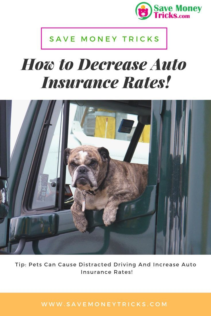 Car Insurance Companies Do Not Protect Pets And Do Not Pay Any