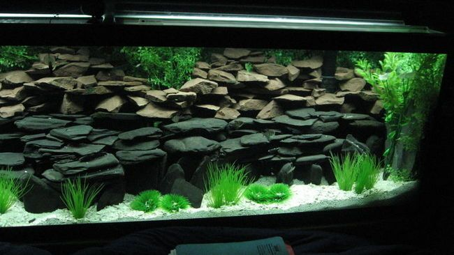 Cichlid tank decoration ideas google search fish tank for African cichlid rock decoration