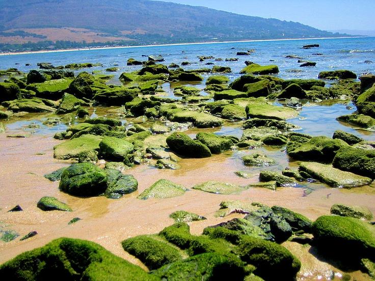 Punta Paloma.Tarifa.