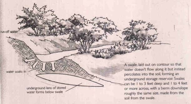 A Swale is a method used to harvest rain water.  They are long shallow trenches that run along the contour of the land, & are perfectly level.  Swales do not direct water flow, but  collect water.  The soil removed from the swale is piled on the downhill side to make a slightly raised berm.  When rain falls,  water collects in the  swale.  Water will slowly seep into soil & collect in underground pockets that will supply the roots of plants through weeks & even months without rain.