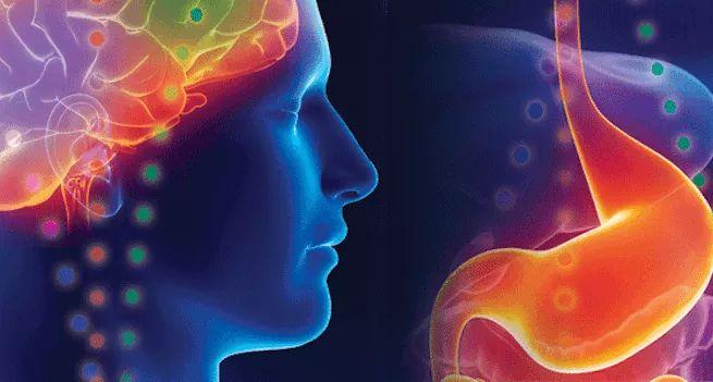 Il Secondo Cervello – La pancia sente agisce ricorda più della testa