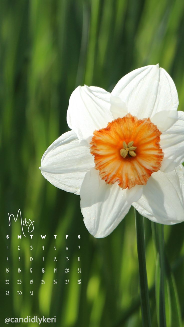 Wallpaper download blog - White Flower May 2016 Calendar Wallpaper Free Download For Iphone Android Or Desktop Background On The