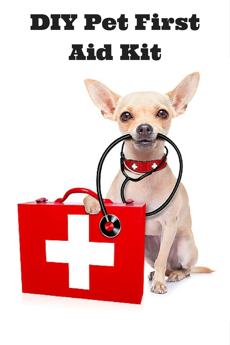 Are you prepared with a pet first aid kit that can help with minor health problems, or to stabilize your pet until you can get your pet to a veterinarian? Check out our latest article where we share how to put together a DIY pet first aid kit that can address pet injuries for dogs and cats.