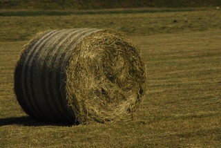 Hay and straw for sale, round hay bales, small hay bales, heston bales,Halage for sale,delivery, Suffolk, Essex, woodbridge, ipswich, Southwold, livery,Heritage Coast Stud