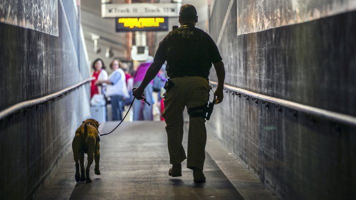 City's K9 Unit Crucial to Sniffing out Crime and Drugs www.spice4life.co.za
