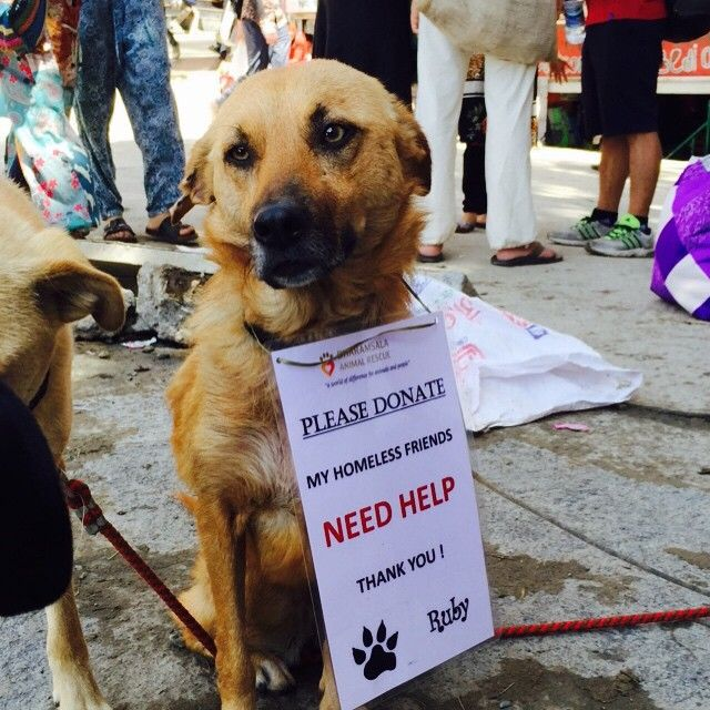 The sign says it all  #ruby #dharamsaladogs #mcleodganj #animallovers #animalwelfare #desidogs come visit us today in Mcleod.#dogsofinstagram #india #sexyeyes #indiaanimals #indiandogsrule #adoptastray #fundraising #nofilter #indianprincess