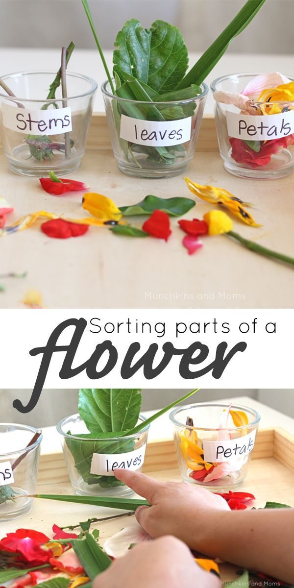 Sorting parts of a flower- a great hands-on preschool lesson and a sensory rich experience