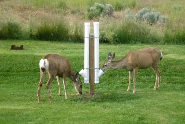Homemade deer feeder hunting pinterest homemade for How to build a deer feeder out of pvc pipe
