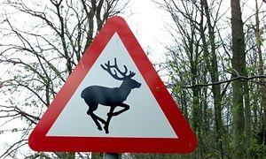 Deer crossing. 50 Years of British Road Signs