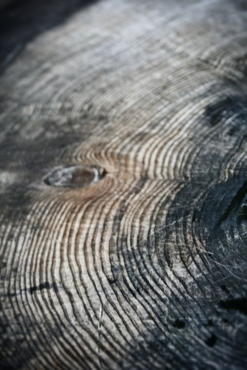 I know it's random... but this looks like a finger print not a tree stump