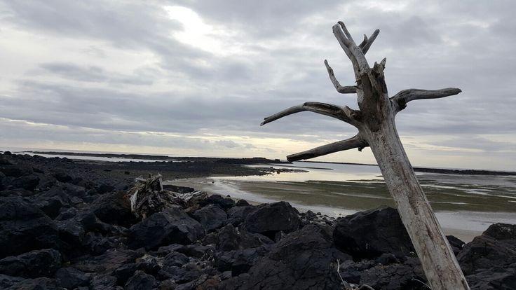 Driftwood pictuer taken at Wynyard beach, Tasmania