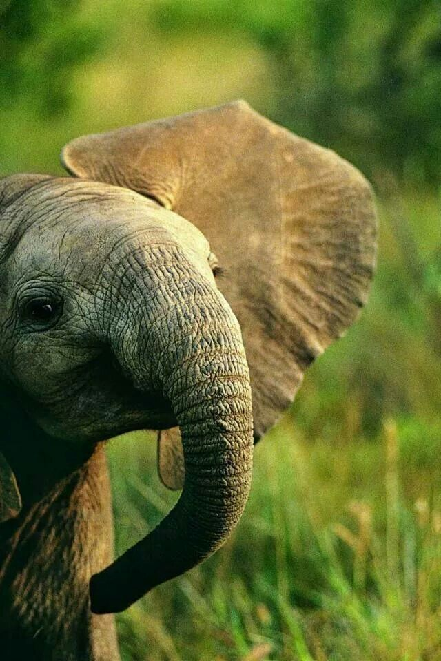 Im in love with elephants♡