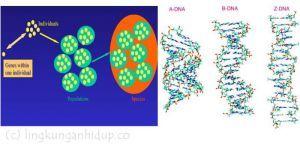 keanekaragaman hayati tingkat gen