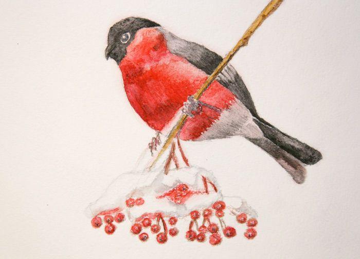Снегирь картинка рисунок карандашом