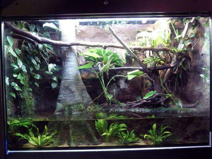 197 Beste Afbeeldingen Van Vivarium Aquarium Amp Terrariums