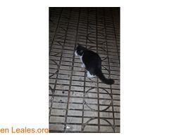 Orkita lleva 10años en la calle.Castrada ℹ   #Adopta con #Canarias7  Esta gata es muy cariñosa e inteligente lleva 10 años en la calle y ya va siendo hora de que sepa lo que es una manta o un trozo de tela donde echarse.  Cubrimos todos los gastos para que reciba el cariño de una familia y no las patadas de la gente arañazos de los gatos callejeros mordeduras de los perros y atropellos de los coches.  Está en peligro.   En todos los navegadores: Leales.org y en todas las redes sociales…