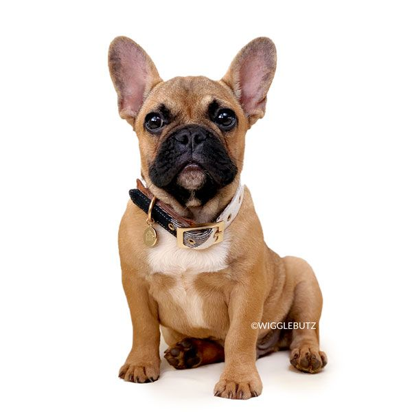 Journey Red Fawn Sable W Black Mask French Bulldog Puppy For