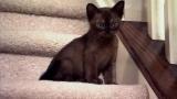 Too Cute! Kittens : Videos : Animal Planet